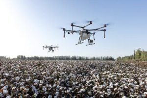 Drones flying over a cotton field